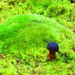 【京都】緑の苔に覆われた「西芳寺(苔寺)」の達磨見開き御朱印