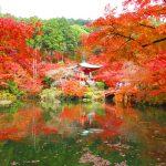 【京都】水面に映る紅葉が素敵な「醍醐寺」の御朱印