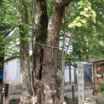 【京都】恋愛成就のパワースポット「愛の木」に願いを込めて♪「梨木神社」の御朱印