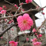 【京都】暗夜の奇祭「県祭」を行う「縣神社」の御朱印【宇治編②】