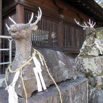 【滋賀】たくさんの狛鹿が珍しい「立木神社」の御朱印