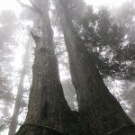 【奈良】一言だけ願いを叶えてくれる神様を祀る金剛山山頂「葛木神社」の御朱印