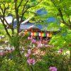 【西国巡礼】Day10-2.龍の眠る日本最初の厄除霊場!第7番札所「岡寺」の御朱印