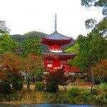 【京都】天地人の配置が見事な嵯峨菊が咲き誇る♪「大覚寺」の龍の御朱印帳と御朱印