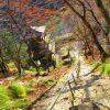 【京都】本堂へ続く階段の高度感が凄い!関西花の寺「金剛院」の御朱印