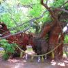 【静岡】徳川家康公が武運長久を祈願した浜松城の鬼門鎮守「浜松八幡宮」の御朱印