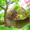 【京都】幸福地蔵さまに一願成就を祈願する「鈴虫寺」の御朱印