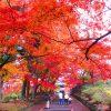 【京都】色鮮やかな紅葉が見事な「毘沙門堂」の期間限定御朱印