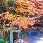【三重】東海自然歩道で行く紅葉の「桃林寺」の御朱印