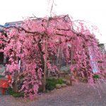 【三重】倭姫命の御宮所に創建された「神戸宗社」の御朱印