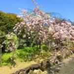 【大阪】聖徳太子が開基した尼寺「道明寺」の御朱印