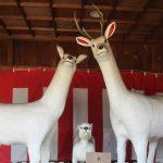 【愛知】神鹿の親子に良縁祈願♪三河国一之宮「砥鹿神社」の御朱印帳と御朱印