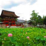 【愛知】蓮池に朱色の随神門が映える「伊賀八幡宮」の御朱印