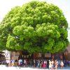 【東京】総面積約70万㎡の緑に囲まれた「明治神宮」の御朱印帳と御朱印