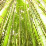 【神奈川】千本の孟宗竹林が圧巻!「報国寺」の御朱印