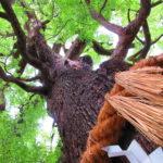 【京都】後白河上皇が霊地熊野を再現した「新熊野神社」の御朱印