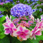 【京都】満開のツツジや紫陽花を愛でる♪宇治に佇む花の寺「三室戸寺」の御朱印