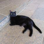 【徳島】願いを叶えてくれる猫神さんを祀る「王子神社」の限定御朱印