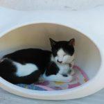 【福井】猫好きには堪らない♪福井の猫寺「御誕生寺」の御朱印帳&御朱印