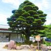 【石川】幾多の戦火の御英霊を祀る「石川護国神社」の御朱印