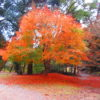 【兵庫】播磨天台六山の一つ「随願寺」の可愛らしい絵文字御朱印